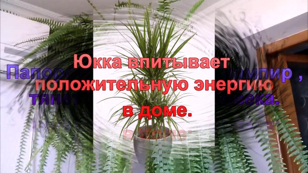 комнатные цветы-вампиры фото