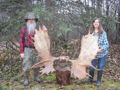 Wife And I Harvest An Alaskan Trophy Moose