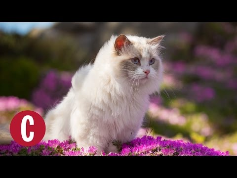 There is a Cat Sanctuary in Hawaii Where You Can Cuddle Hundreds of Fluffy Cats | Cosmopolitan