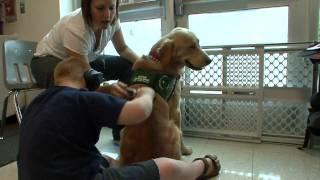 "#5 ""elliot's Class""  - Autism Service Dog"