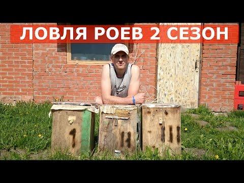ЛОВЛЯ БРОДЯЧИХ РОЕВ КАК ПОЙМАТЬ РОЙ ПЧЕЛ СЕЗОН 2 / 1 серия