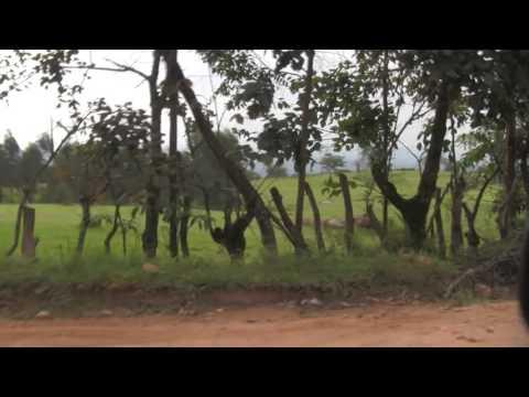 Beni-Butembo Highway, Congo, D.R.