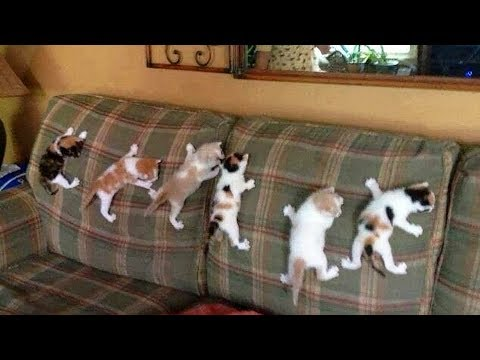 CUTE Cats Love Climbing!  Spiderman Cat So Funny   Funny Everyday Compilation