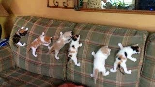 CUTE Cats Love Climbing!  Spiderman Cat So Funny | Funny Everyday Compilation