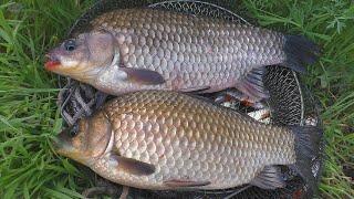Ловля крупного карася весной Рыбалка в мае на поплавок My fishing