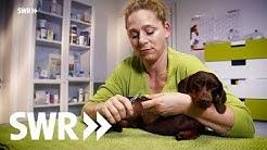 Ein Hund, eine Natter und eine Katze   SWR Tierarztgeschichten