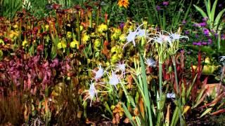 Heartland Highways 1209: Whiteside Garden Update,  Daylily Farm, Old Time Radio Theater,