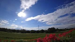 河川敷に咲いた彼岸花と秋の空をタイムラプス映像にまとめました。