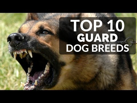 TOP 10 GUARD DOGS FOR FAMILIES - Best Puppy Breed To Protect Family And House