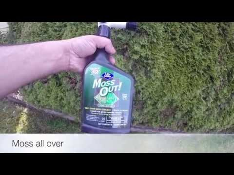 Removing Moss With Soda Crystals Doovi