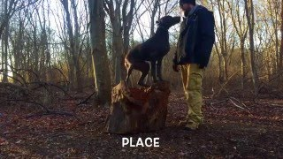 Long Island Dog Trainer: Shorthaired Pointer with Amazing Obedience: Best GSP Dog Trainers in NY