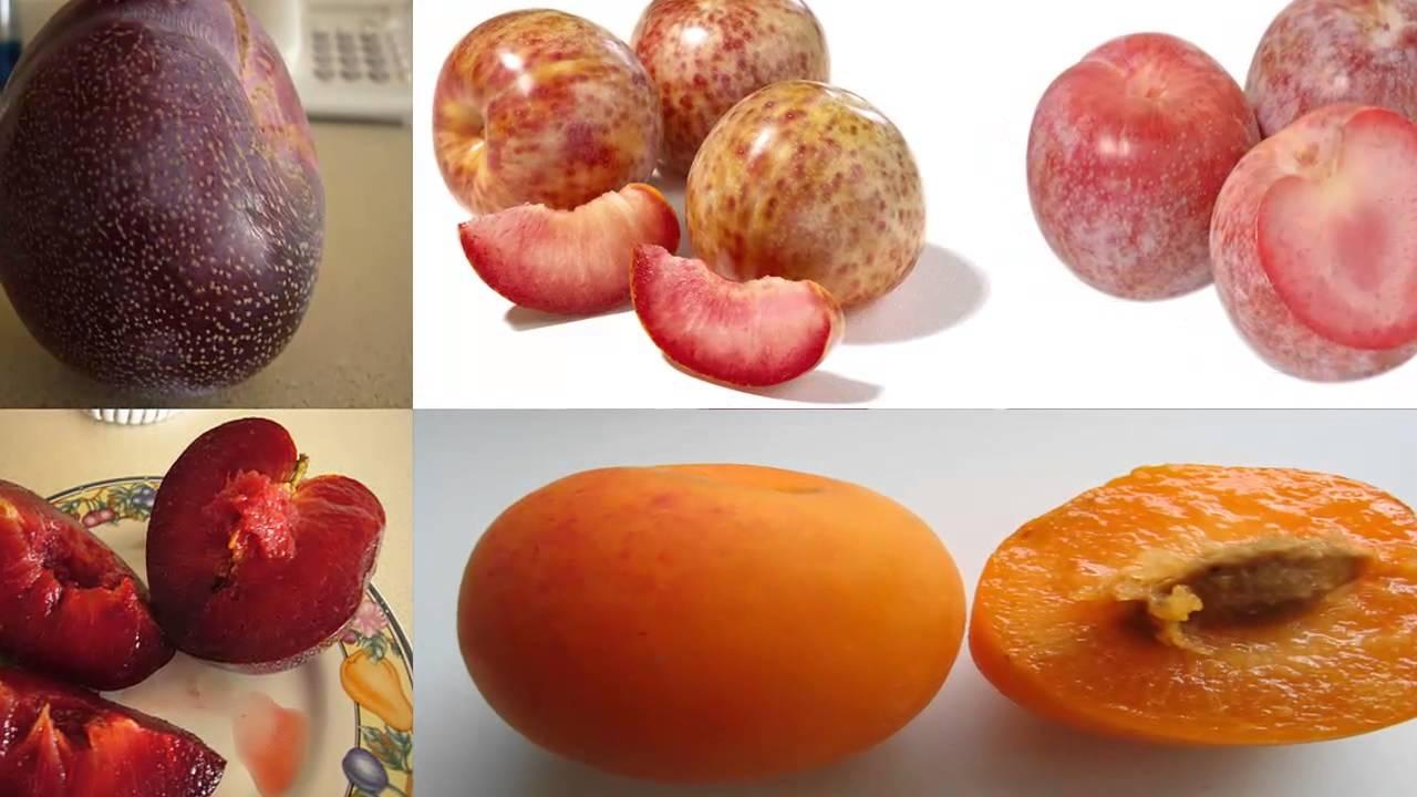 Híbridos de Frutas