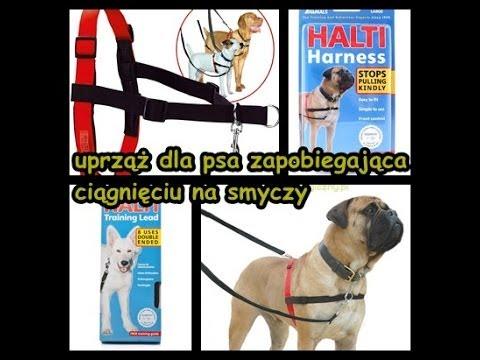 Halti Harness - uprząż zapobiegająca ciągnięciu na smyczy