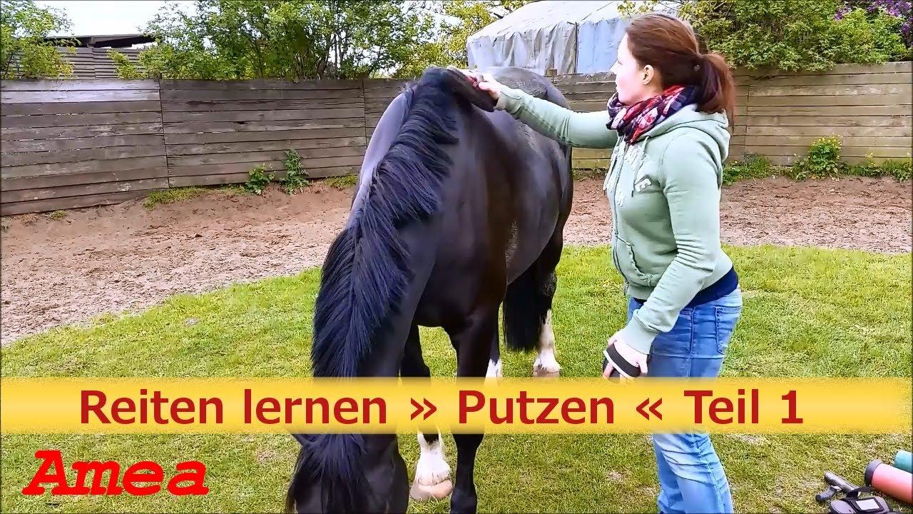 reiten lernen pferde richtig putzen pferde tipps und tricks hd youtube. Black Bedroom Furniture Sets. Home Design Ideas