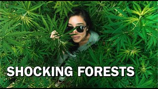 Trekking in Wild Marijuana Fields (NEPAL HIMALAYAS)