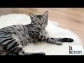 Pisici Amuzante ✔ Faze Comice cu Pisici 2017 # 2 Funny Cats - parte 35
