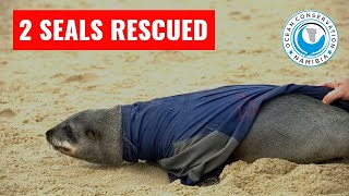 Seals rescued from DOG LEASH and JACKET