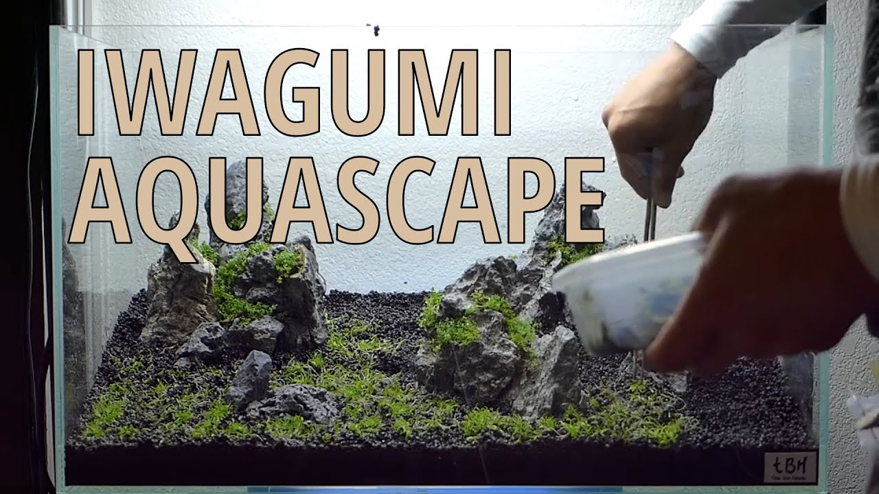 Attractive Setting Up Nature Aquarium Aquascape, Iwagumi 5A   YouTube
