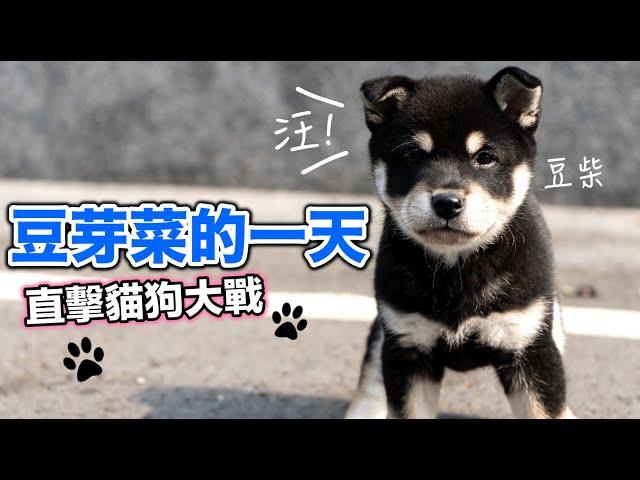豆芽菜的一天,直擊貓狗大戰『學會神一般的技能』療癒系列