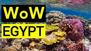 Египет Крутой коралловый риф Красное море Шарм эль шейх Shorts