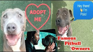 Famous Pitbull Owners - Please Adopt or Rescue Animals