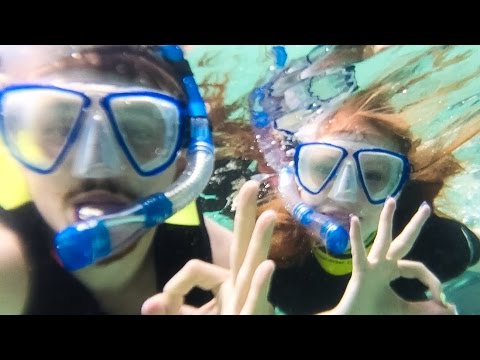 SWIMMING WITH SHARKS & DOLPHINS!