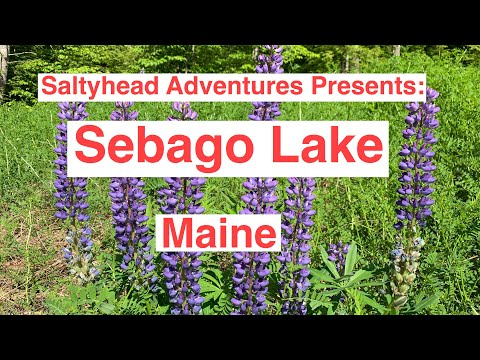 Sebago Lake Maine With Saltyhead