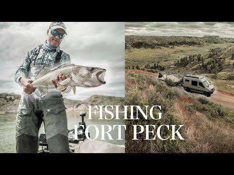 Targeting Big Fish On Fort Peck Reservoir 2019 | Fishcamp Montana