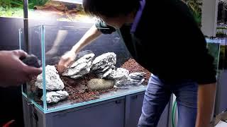 видео Оформление аквариума. Задний фон, камни, коряги - Растения в аквариуме - Каталог статей - Каталог статей - Аквариумные рыбки