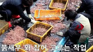 새우젓도매 No 2 북 새우젓 도매가격 (빨간새우젓) …