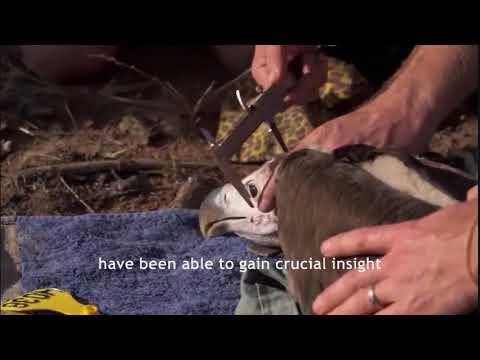 Zululand Vulture Crisis