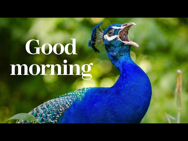 Good morning wishes and greetings - 30 seconds WhatsApp status video Happy Sunday