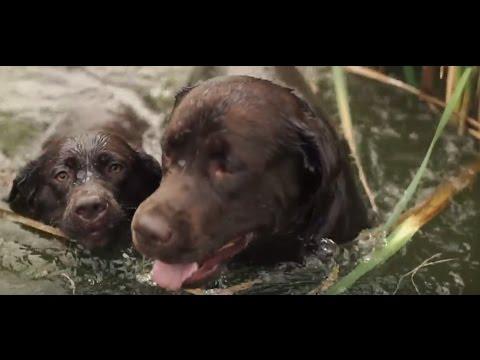 Интернет издание про собак, все о породах собак