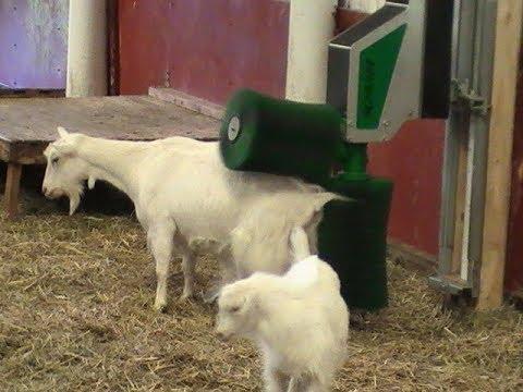 SCHURR 2-brush-system for goats goatbrush - Schurr Gerätebau
