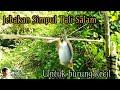 Menjebak Burung Prenjak Pakai Jebakan Jerat Simpul Tali Salam  Mp3 - Mp4 Download