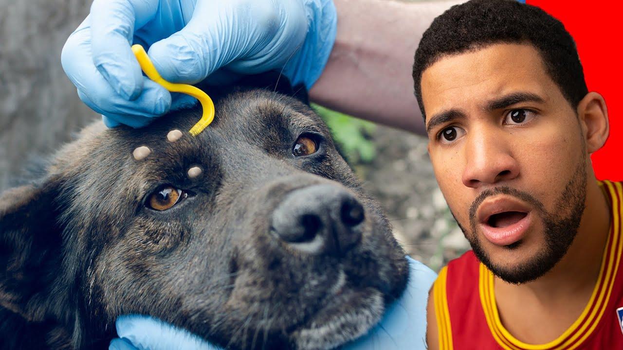 Rescatando Animales Abandonados #8