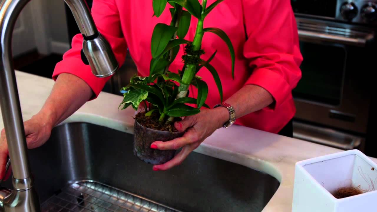 Orchid Care 1 800 Flowers Youtube