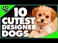 Designer Dogs 101: Today's Most Adorable Designer Dog Breeds Popular Cutest Dogs - Animal Facts
