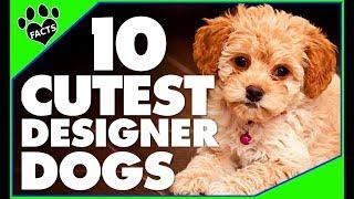 Designer Dogs 101: Today's Most Adorable Designer Dog Breeds Popular Cutest Dogs - Animal Facts