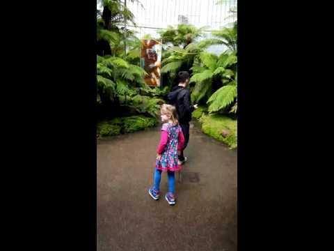 Glasgow botanic gardens.Казахи в Глазго