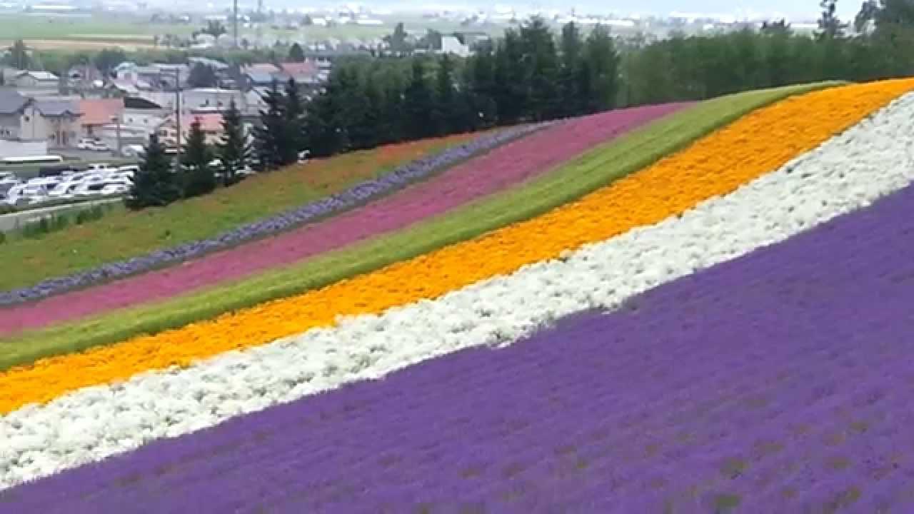 Pt One Tomita Lavender Farm At Furano Hokkaido Japan On Sunday