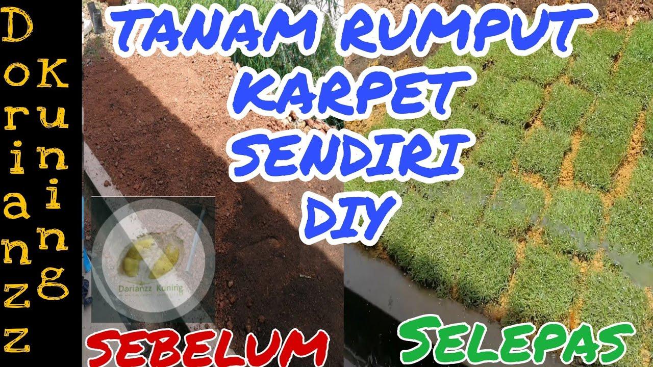 Cara Mudah Tanam Rumput Karpet Easy Way To Grow Grass Youtube Cara menanam rumput mutiara