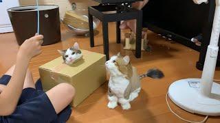 箱一つで大騒ぎする猫と家族がおもしろい   Interesting cats and owners making a fuss in a single box.