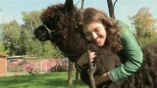 Психолог Люция Сулейманова о том, почему животные вызывают нежность (Доброн утро на Первом)