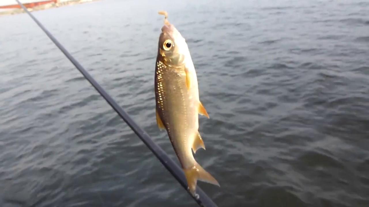 Кз5 николаев рыбалка