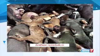 Voice Against Killing Of Dogs In Kerala | Tamil Nadu | News7 Tamil