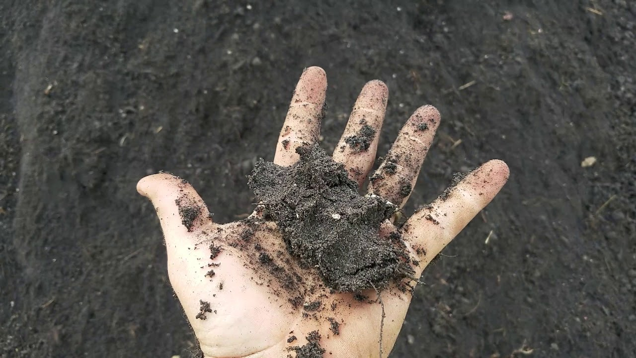 Screening more black sticky Topsoil