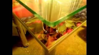 Купить стеклянный стол,кухонный стол,обеденный стеклянный стол.(Интернет магазин стеклянных столов http://ch-p-tolstov-mebel-i.tiu.ru/. Стеклянные столы на заказ., 2013-05-15T19:51:52.000Z)