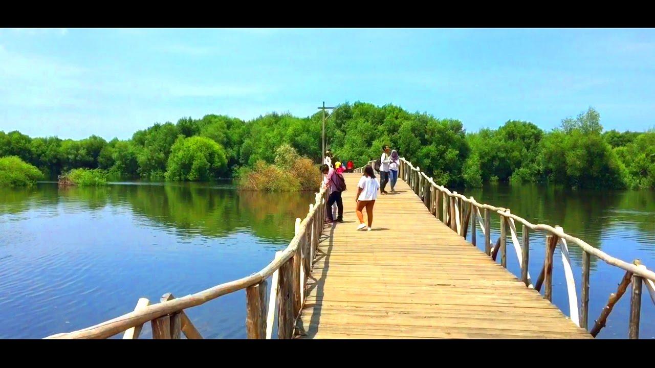 JAKARTA - wisata alam hutan mangrove - YouTube