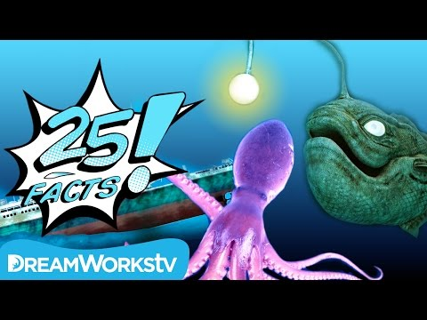25 Facts About THE DEEP OCEAN | 25 FACTS on Go90